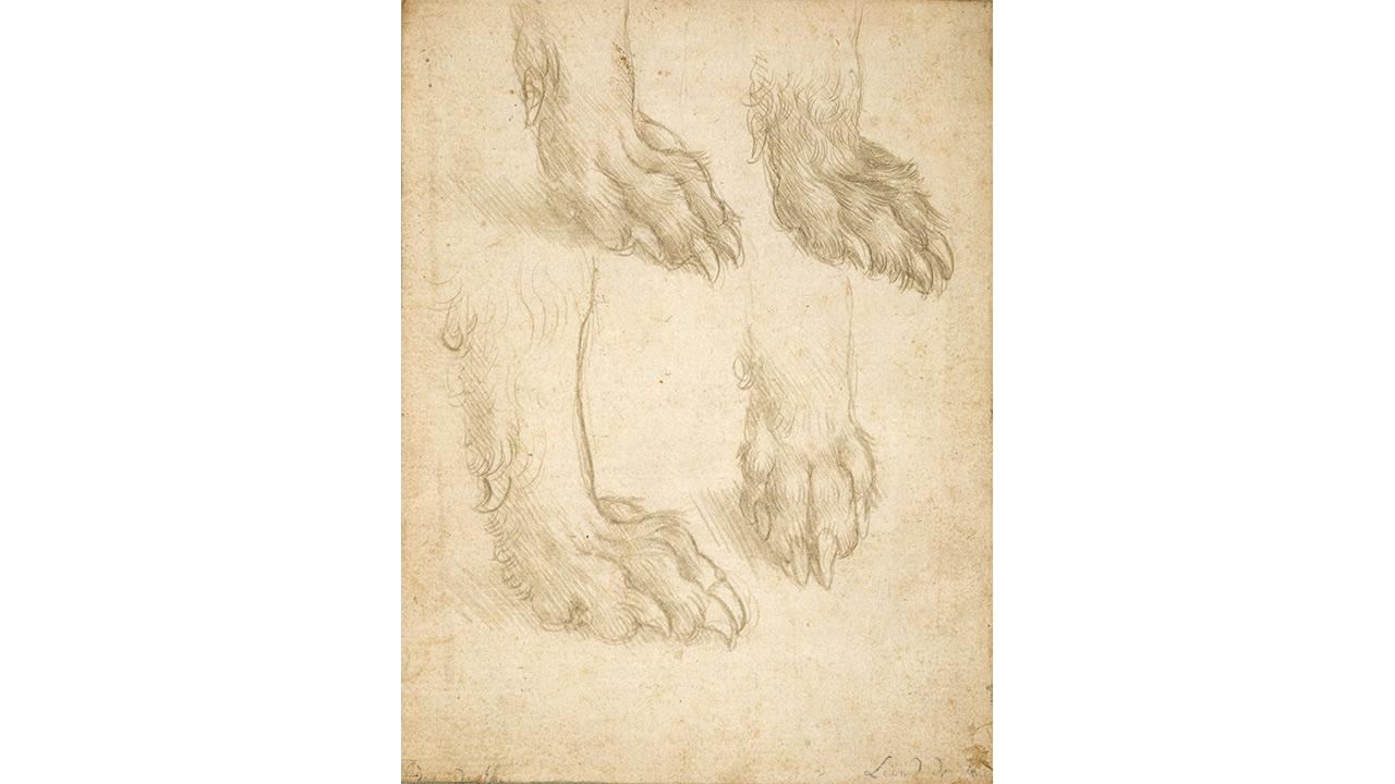 Hondenpoten-Leonardo-Da-Vinci.jpg